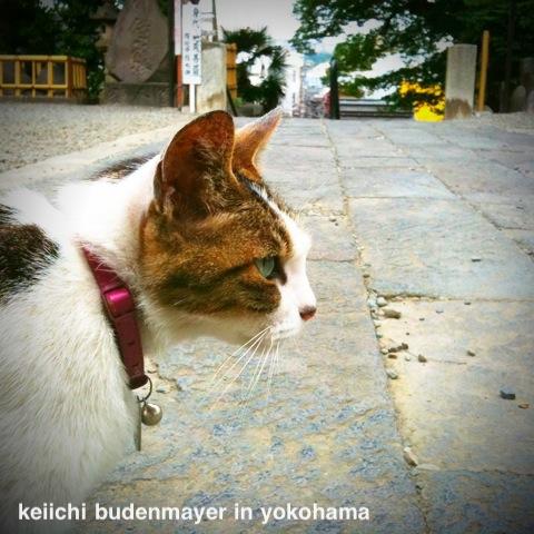 foto in Yokohama: 訳はない。わけもなく。